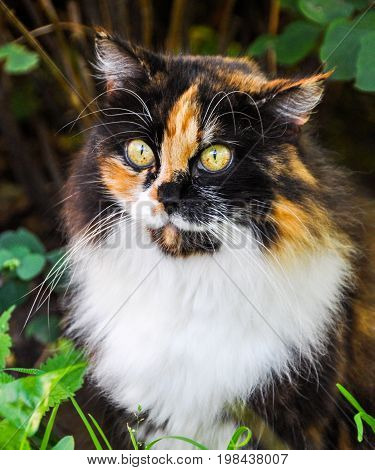 one lost beautiful spotted fluffy multicolor cat outside
