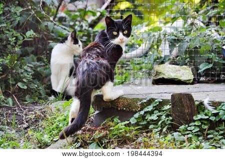 Homeless frightened cats on nature summer background