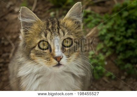 Small multicolor cat with brown eyes and long whiskers