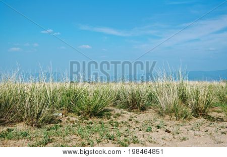 steppe grasses Barguzin valley Buryatia Russia.  travel