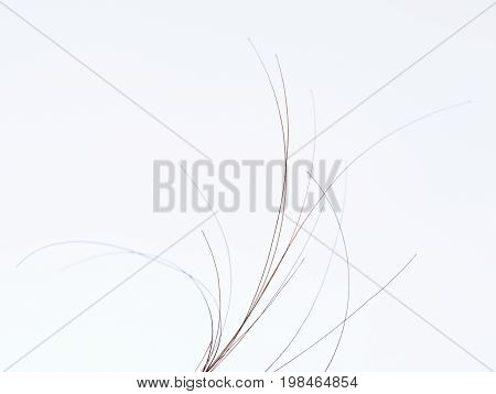 Brown dark human hair close-up isolated on white background