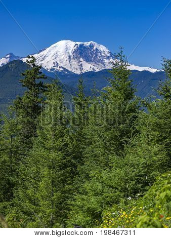 Mt. Rainier Washington State Park Views Of The Peak Over The Trees