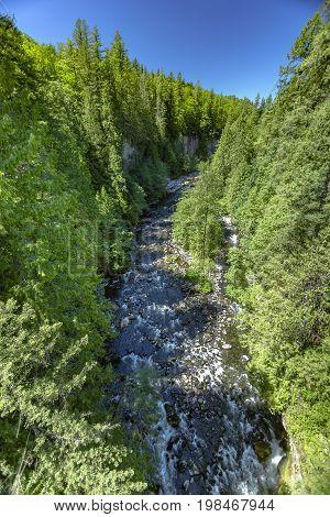 River Bed Among Dense Trees In Washington