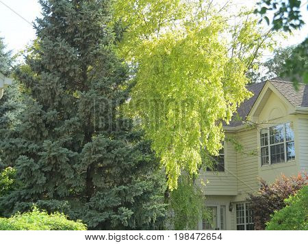 Beautiful shades of green trees against town house background