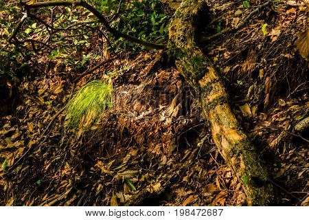 Sunlight illuminating a patch of long grass in a forest next to a fallen tree