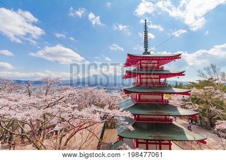 Fujiyoshida Japan - April 22 :Red pagoda in cherry blossom sakura in spring season with Mt Fuji on the sky background the most famous place in Japan to travelingFujiyoshida Japan