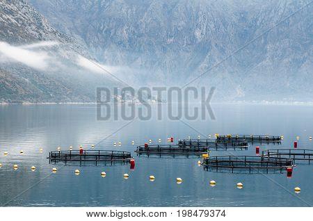 Fish Farming, Color Image, Selective Focus, Horizontal Image