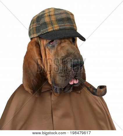 Bloodhound dog dressed in the style of Sherlock Holmes with a pipe isolated on a white background