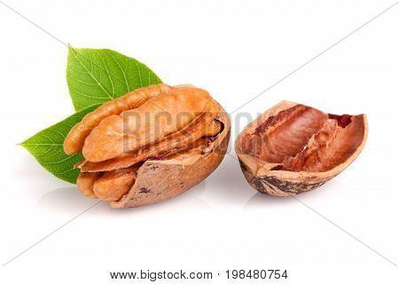 one pecan with leaves isolated on white background.