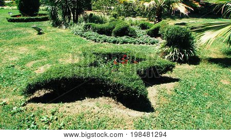 Beautiful topiary with flowers in the form of a star on the lawn in the park