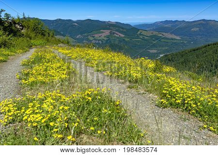 A Hiking Path Meanders Along A Mountain Meadow On A Sunny Day