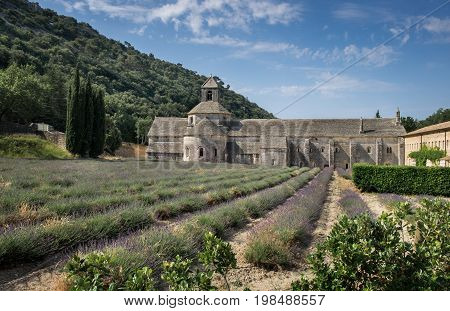 Lavender field at ancient monastery Abbey of Senanque. Vaucluse Provence region. France