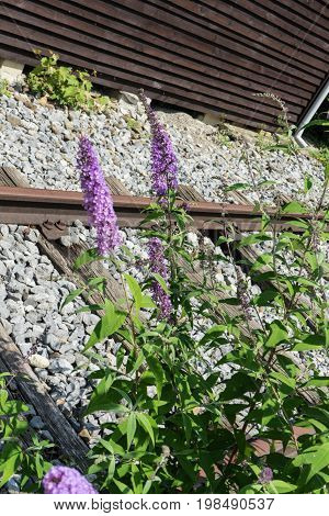 purple flower next to old train track in industry area