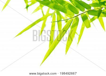 Close up nature of green leaf in park natural green plants macro using as a background