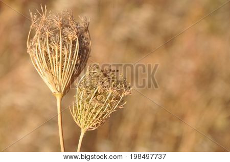 Natural dry yellow plants natural motive background photo
