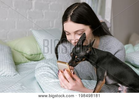 Strong friendship between owner and dog. Toy Terrier and young woman, girl show to puppy picture on her mobile phone. Modern social media background