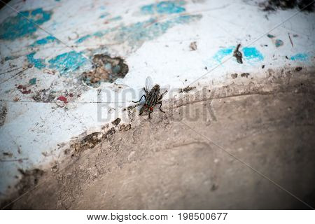 Fly on concrete street bench in the park