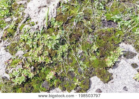 Granite Rock With Moss Background. Background Of Stone Surface. Textured Processing Hard Stone.