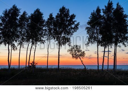 Row of trees with one inclined tree among others in front of the Baltic sea at sunset in Latvia