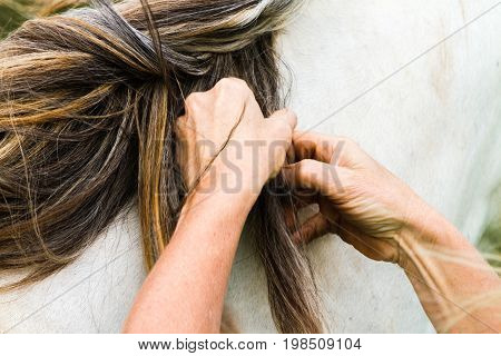 Woman grooming the mane of a very special palomino horse in a close up view of her hands playing with the long hair on an Equine Assisted Psychotherapy farm in NSW Australia