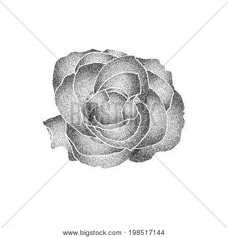 Grunge halftone black and white rose isolated on a white background. Vector illustratoin with halftone dots texture for popart, trends design.