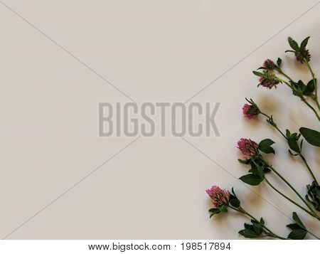 Isolated stalks of the clover on a gray background - the abstract floral background. Several branches of trefoil with lilac flowers are located along one side of the photo