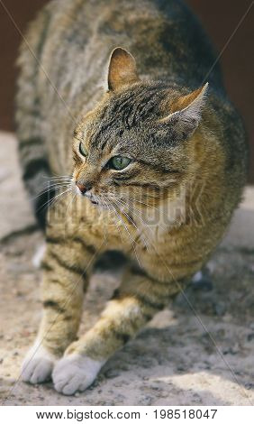 Fighting homeless cat in agressive position - close-up view