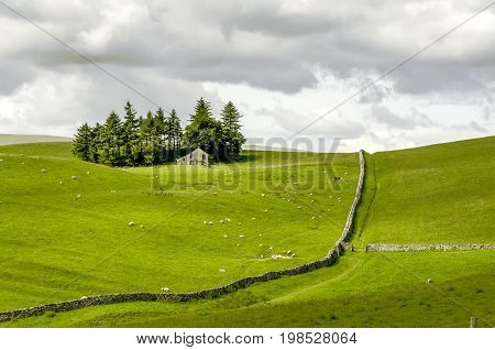 Sunlit Fields of sheep on moorland under a cloudy sky with dry stone walls and an isolated farm house surrounded by trees.
