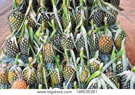 Pineapple At Fruit Shop Or Greengrocery On Street For Sale At Market