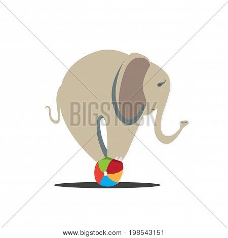 elephant balancing on ball. circus performances presentation show isolated on white background