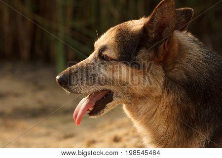 Dog face cute stray shelter close up.