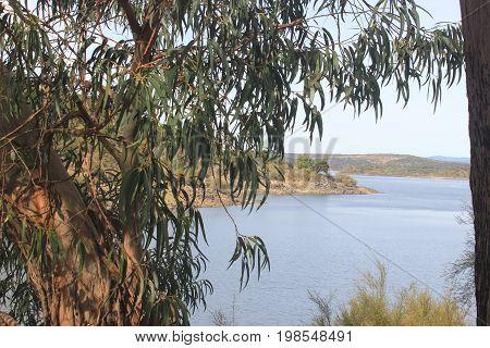 Paisagem beira rio em volta de eucaliptos