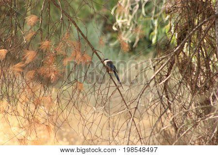 Pássaro num ramo de uma árvore no outono