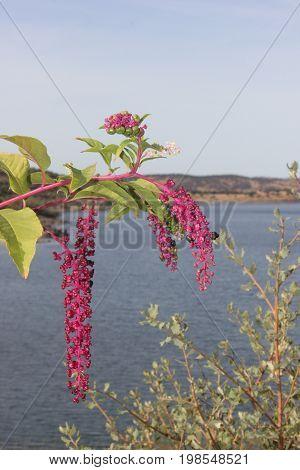 Flor cor de rosa à beira rio