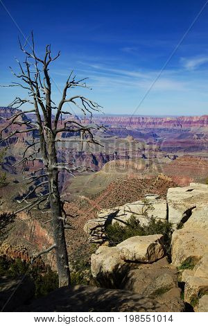 The Grand Canyon in Arizona Surreal view wild colors and breath taking views Millions from around the world come to visit every year!