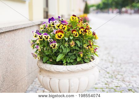 Flowers in vase. Exterior decoration of flowers and pots