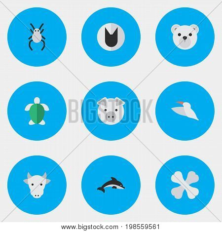 Elements Tomcat, Turtle, Skeleton And Other Synonyms Bones, Animal And Widow.  Vector Illustration Set Of Simple Fauna Icons.