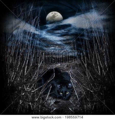 Mysterious road to the moon. Black cat on the way
