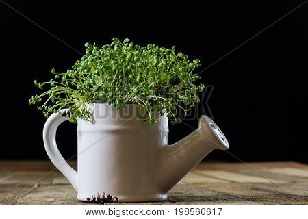 Fresh Sprouts Cress. Black Ground. Wooden Table. Flowerpot In The Shape Of A Watering Can.