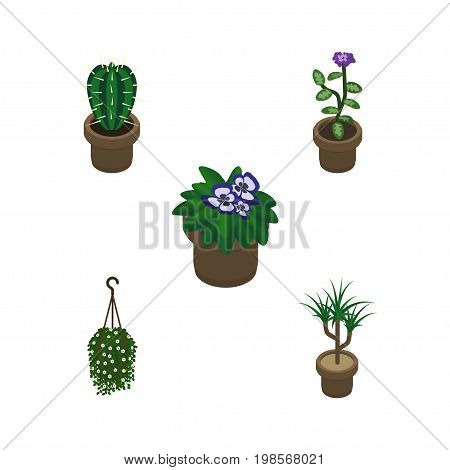Isometric Flower Set Of Houseplant, Peyote, Flowerpot And Other Vector Objects