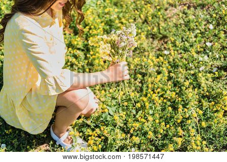 Top view close-up of lovely female child picking up wild flowers and creating bouquet on meadow. She is sitting on grass and smiling. Copy space