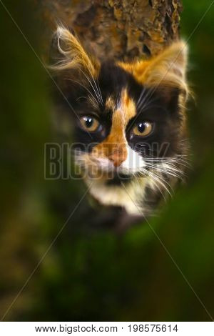 three colored she kitten on knitted shawl  background close up photo