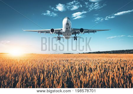 Amazing airplane. Landscape with big white passenger airplane is flying in the blue sky over wheat field at colorful sunset in summer. Passenger airplane is landing. Business trip. Commercial aircraft