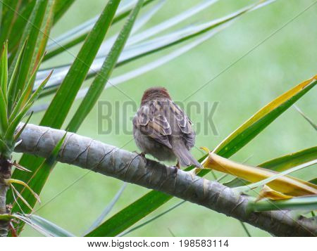 Bird's back. Sparrow's back. Wildlife concept. Bird perched on a branch