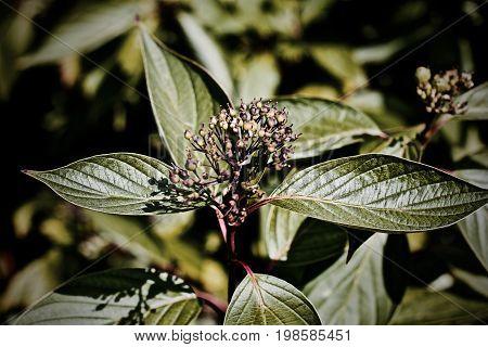 Green Leafs Flower