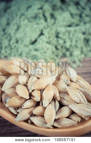 Vintage Photo, Closeup Of Barley Grain On Spoon And Young Powder Barley In Background