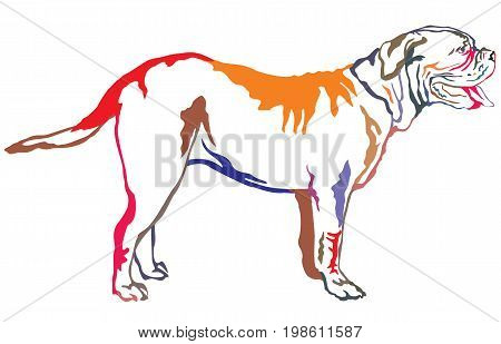 Colorful decorative portrait of standing in profile Dogue de Bordeaux vector isolated illustration on white background