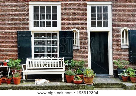 Amsterdam Holland Europe - nice view of a building facade a white bench and a cat