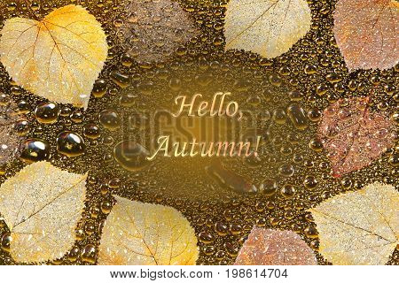 Beautiful autumn background with colorful skeletoned leaves golden water droplets and inscription Hello autumn