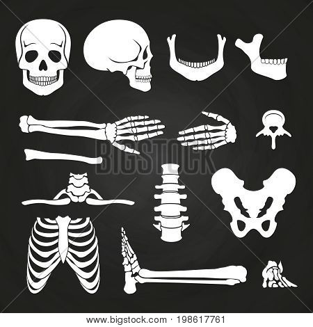 Human bones collection on chalkboard. Skeleton human anatomy, backbone and hand bone. Vector illustration